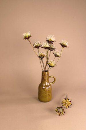 droogbloemen plumosum
