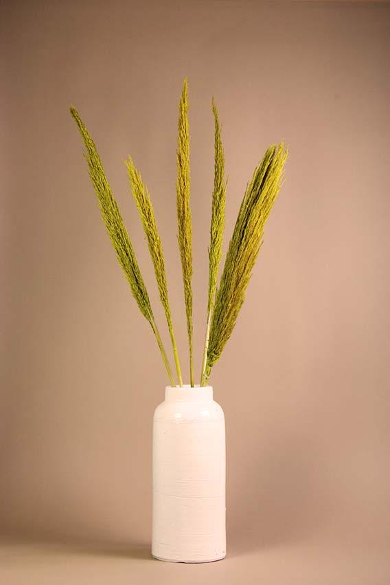 Geel pampasgras