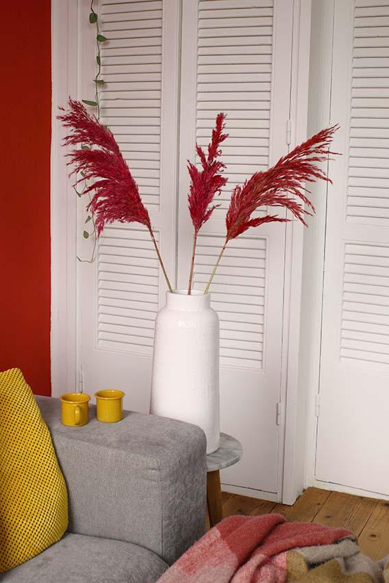 Rode pampas pluimen omgeving