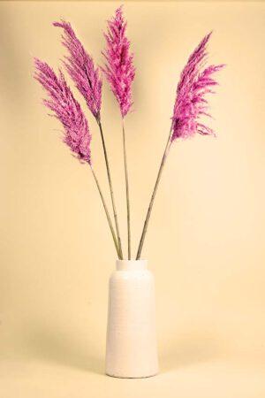 Roze pampas pluimen