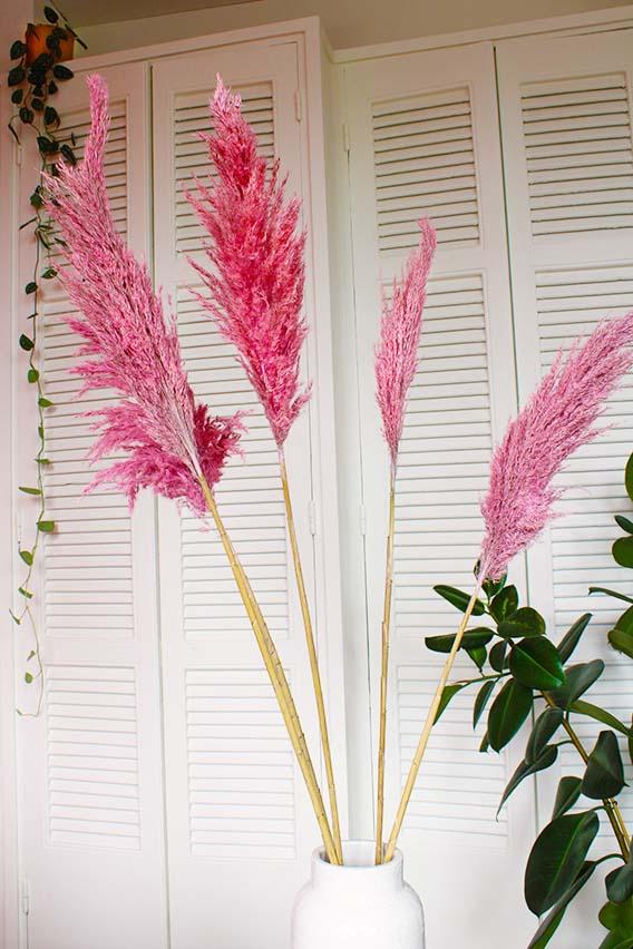 Roze pampas pluimen omgeving