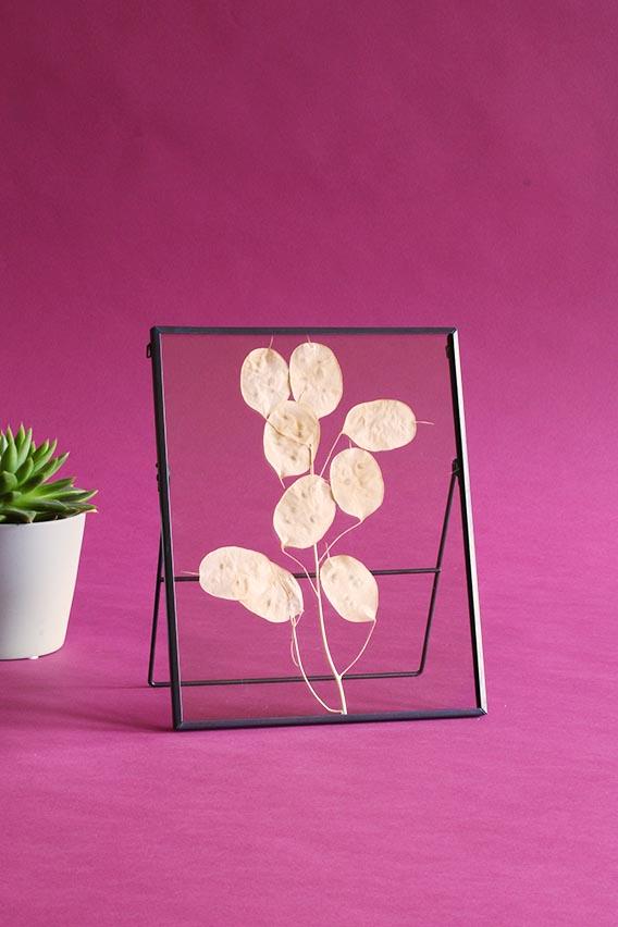 lijst met droogbloemen lunaria