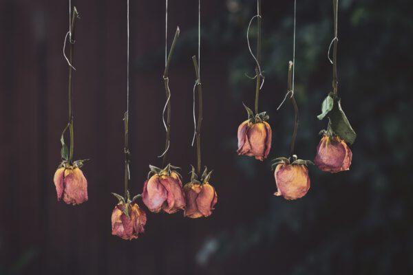 droge rozen opgehangen